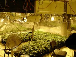 Marijuana Grow Operation Safety Training for Regulatory agencies