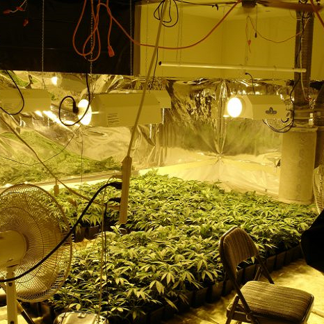 Marijuana Grow Hazards Safety for Regulators