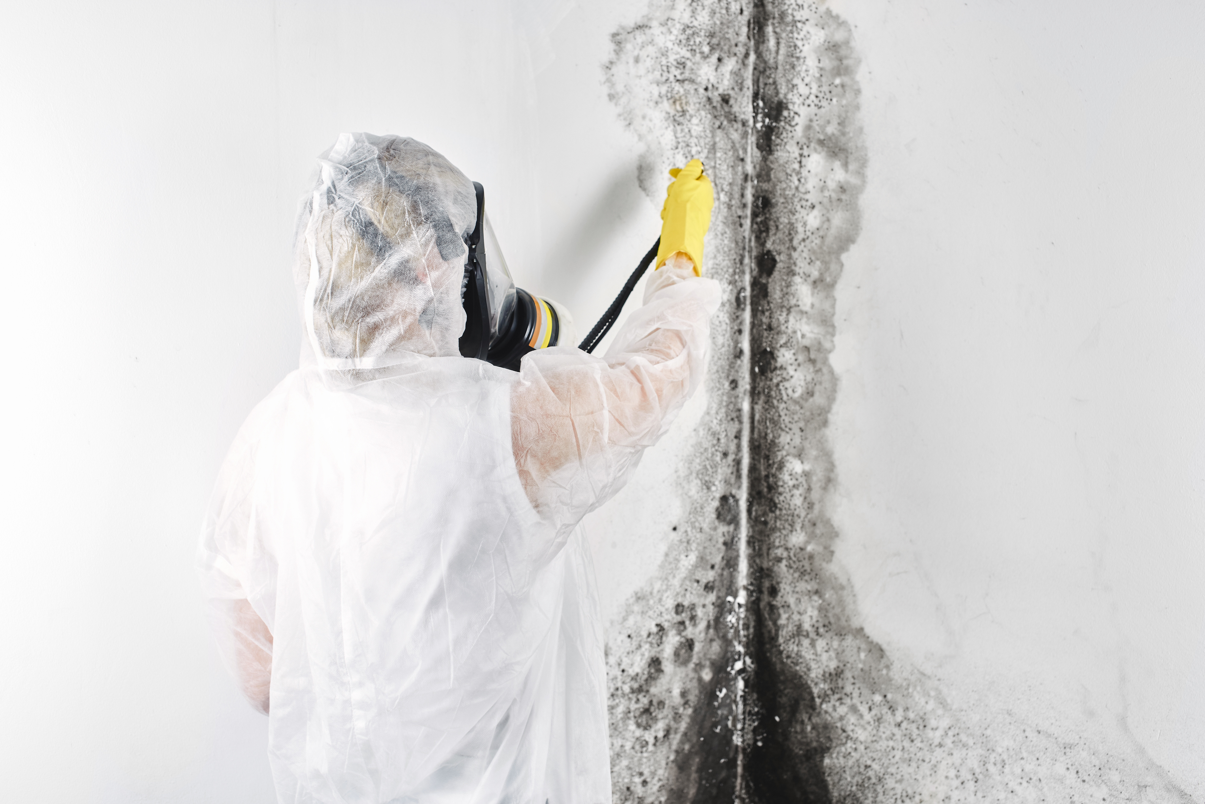 A Professional Disinfector In Overalls Processes The Walls From Mold Removal Of Black Fungus Apartment And House Aspergillus